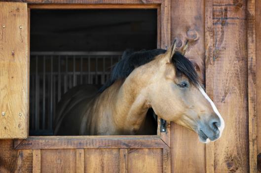 Der Tierschutzhof für Nutztiere in Pfinztal-Berghausen, kümmert sich seit Jahren um kranke, alte und misshandelte Nutztiere. Der Tierschutzhof hat sein neues Zuhause in der Reitanlage Am Weidachsee Pfinztal Berghausen gefunden. Nähe Karlsruhe, Bretten, Re